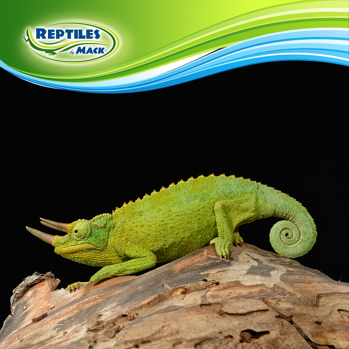 Coupons for reptiles by mack